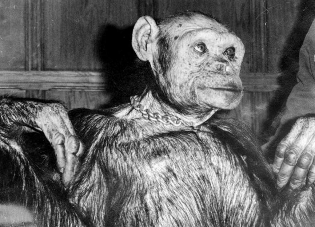 Scientist Claims Human-Chimp Hybrid Was Born In Florida Lab